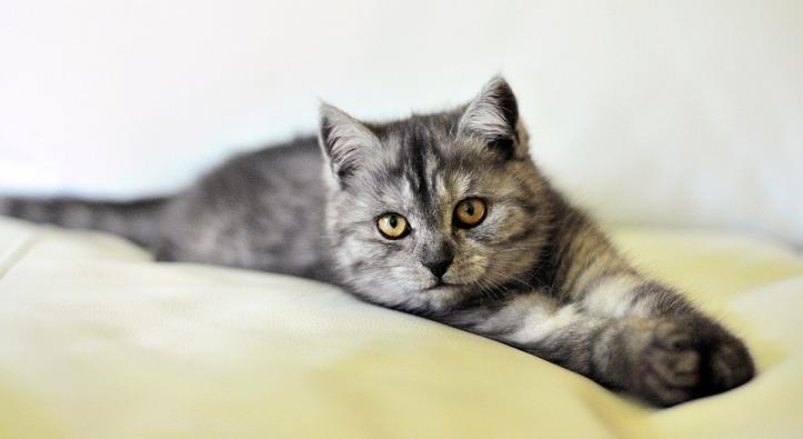 cat-3431537_960_720